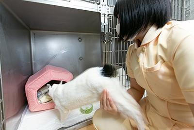 ネコちゃん用の入院室があります