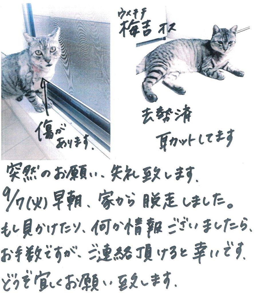 迷い猫のお知らせ